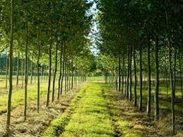 Tree & Hedge Planting Service Country Lane Landscaping